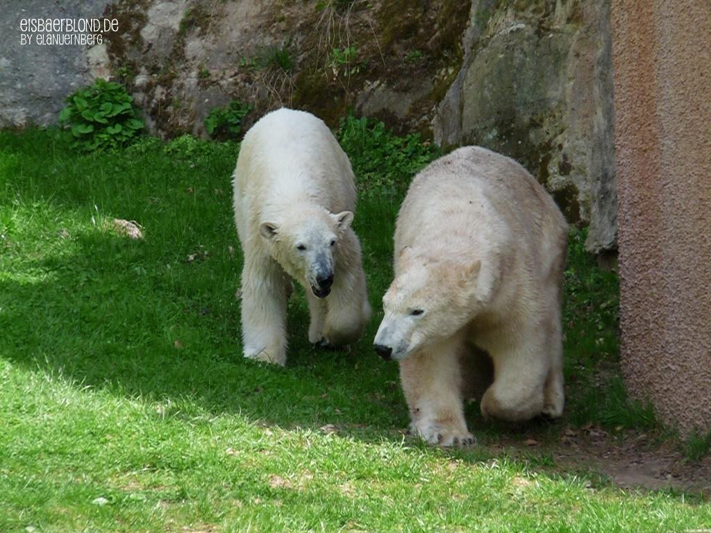 Eisbären-Abschied - Eisbär FLOCKE + Eisbär RASPUTIN - Tiergarten Nürnberg - 22.04.2010
