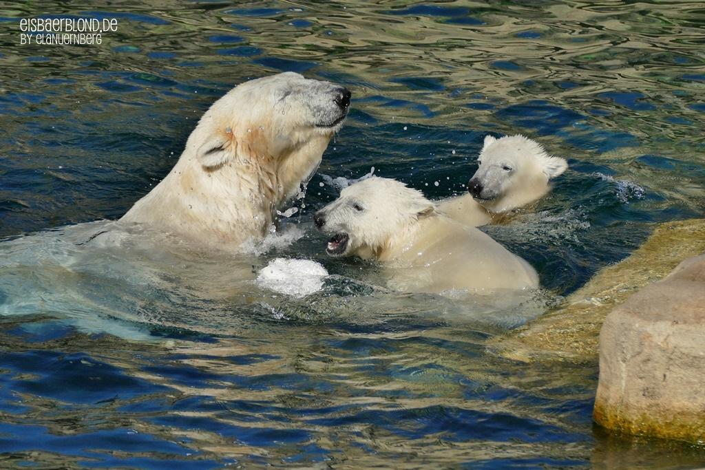 Eisbär VALESKA + Eisbär ANNA + Eisbär ELSA - Zoo am Meer in Bremerhaven - 23.06.2020 - 1