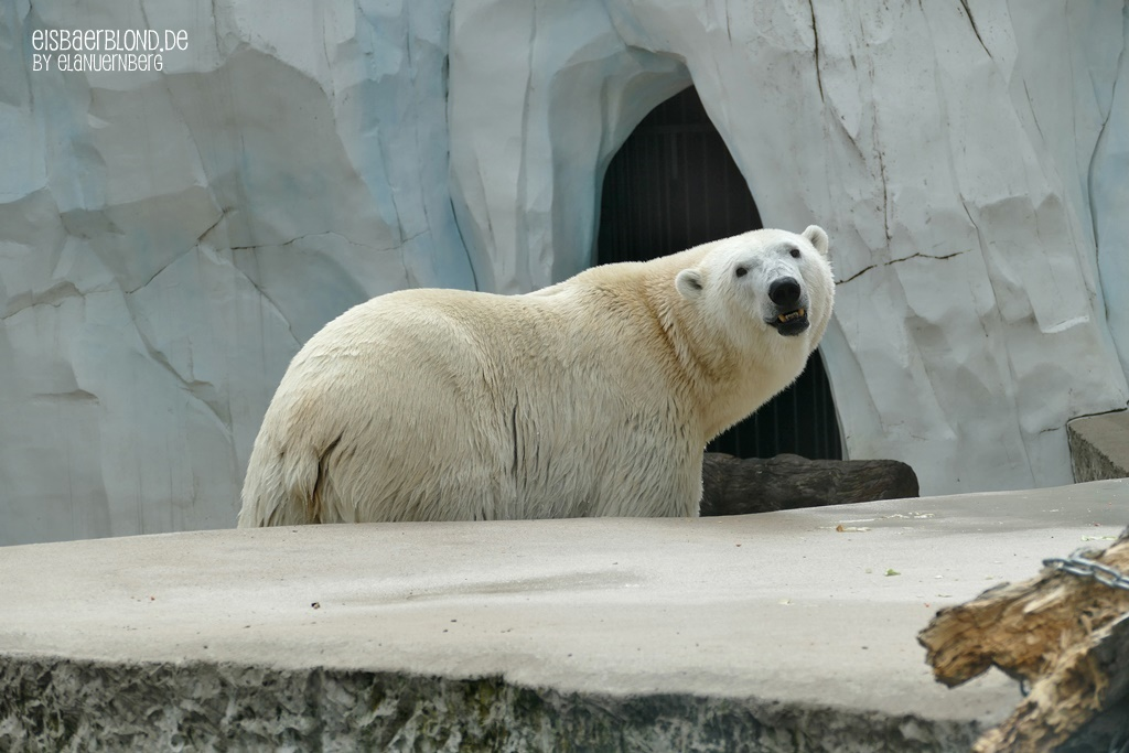 BÄRiges Sommerkino - Eisbär CHARLOTTE - Zoo Karlsruhe - 17.07.2020