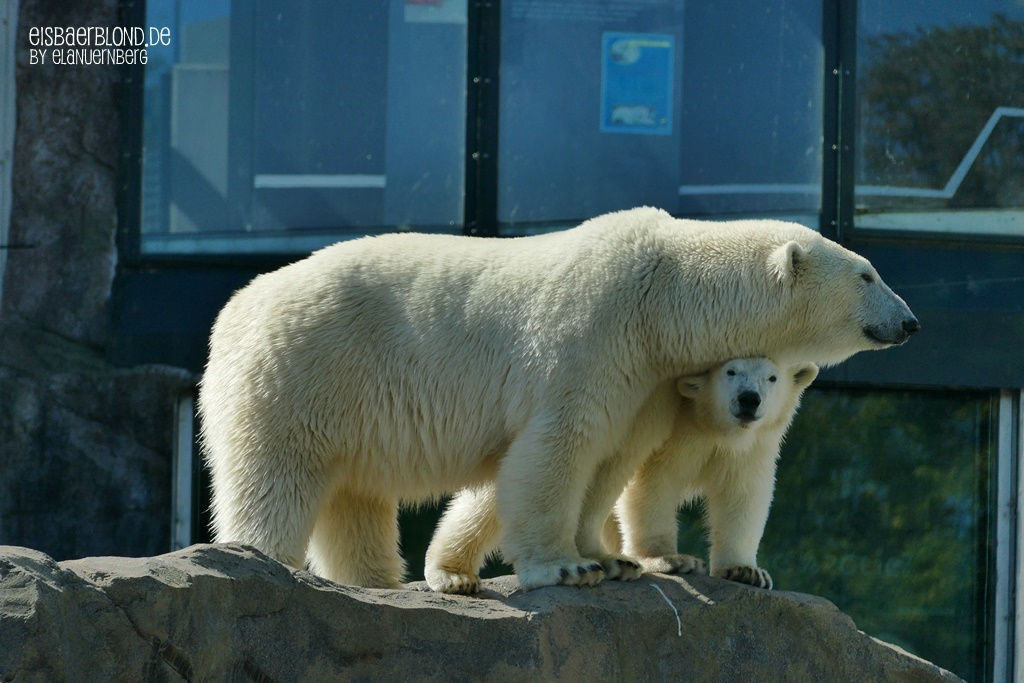 Eisbär Nora