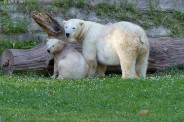 Aus der Eisbären-Truhe - Vera und Charlotte - Tiergarten Nürnberg