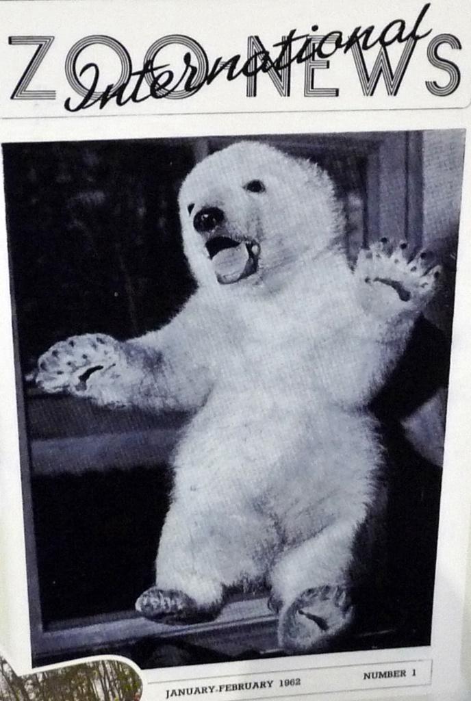 Damals war's- Eisbär TWENTY - Tiergarten Nürnberg