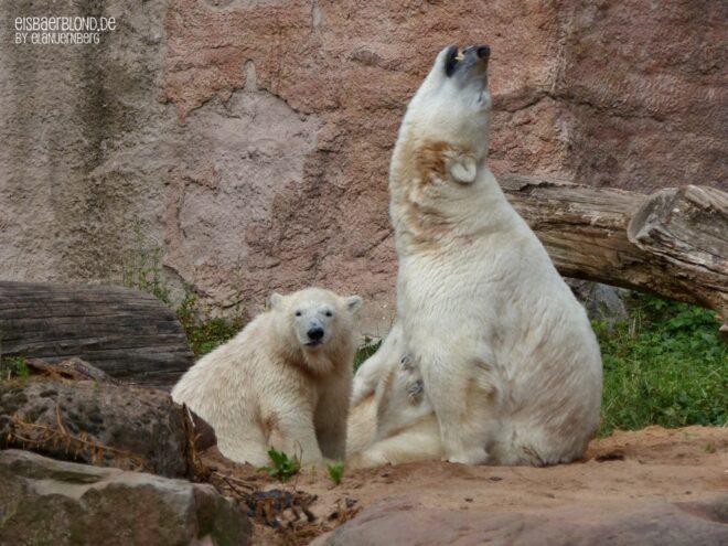 Aus der Eisbären-Truhe - Vera & Charlotte - 14.07.2015