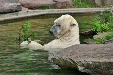 Feinste Ferien-Unterhaltung - Eisbär Nanuq
