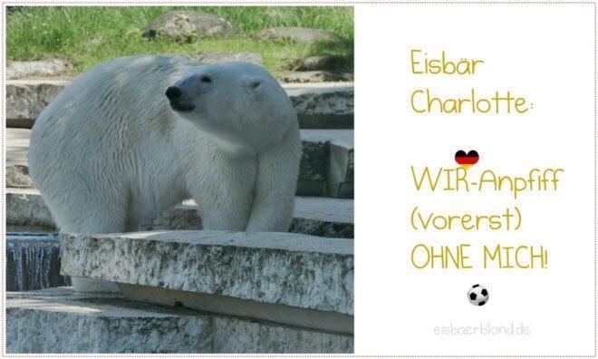Eisbär Charlotte ohne WIR-Anpfiff im Schatten