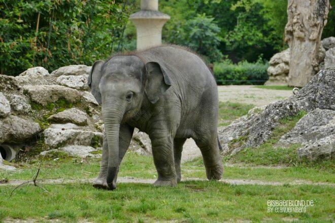 Elefant Otto & Co.