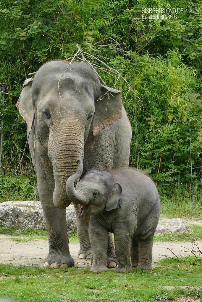 Elefant Otto mit Mama Temi
