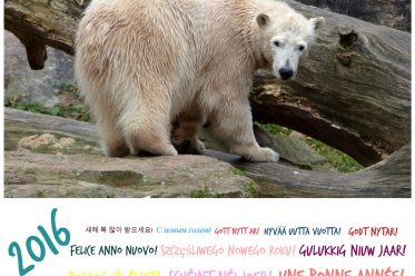 Glückliches Neues Jahr! Eisbär CHARLOTTE - Tiergarten Nürnberg - Frohes Neues Jahr! - 31.12.2015