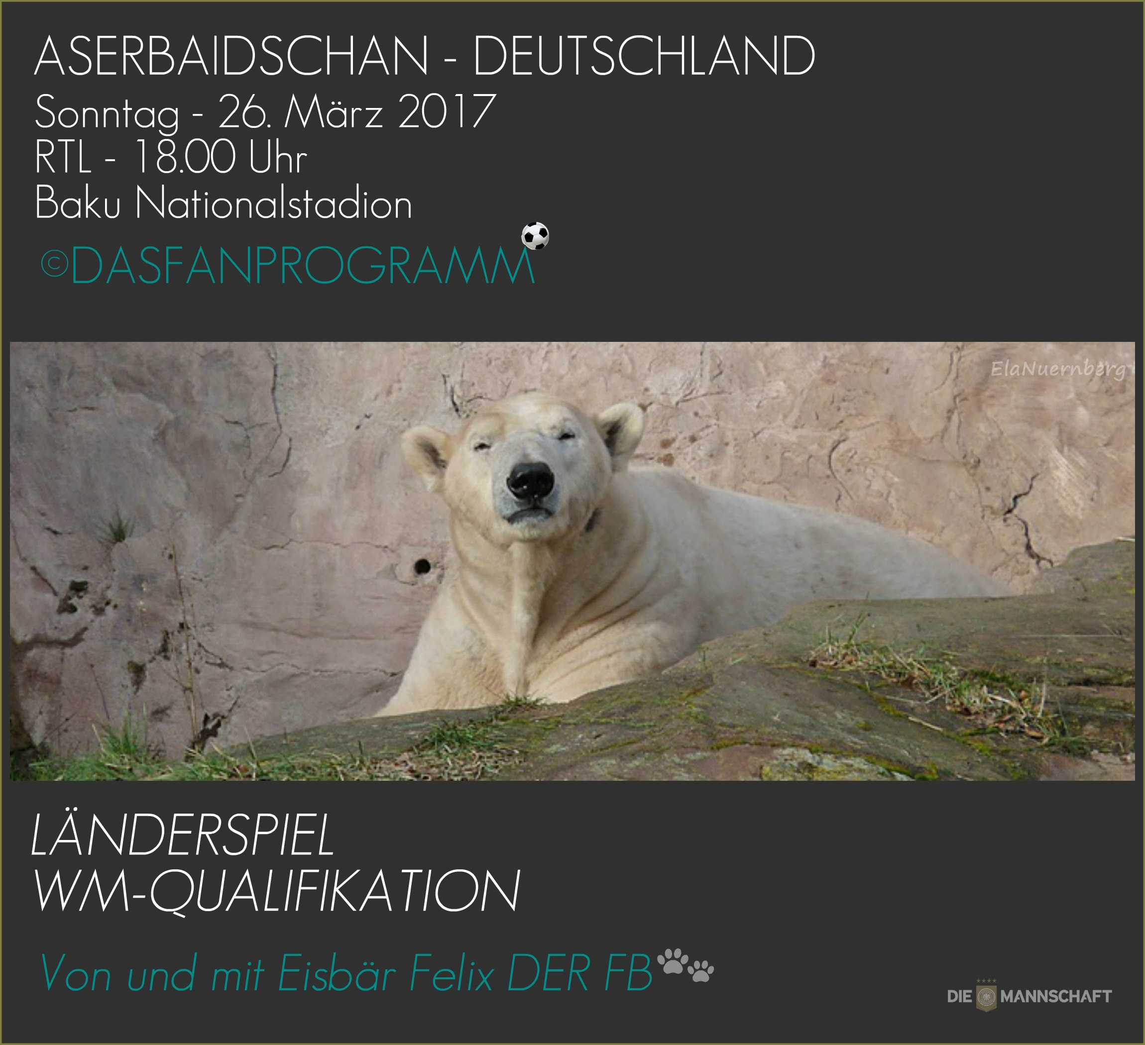 Eisbär Felix DER Fanbeauftragte liegend im Tiergarten Nürnberg