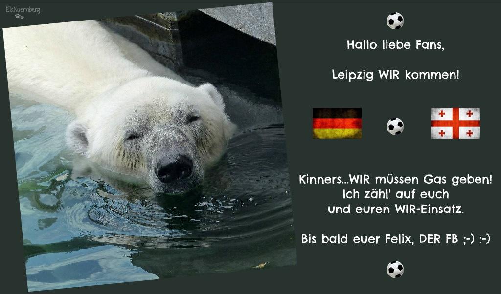 Eisbär Felix DER FanBeauftragte in der Wilhelma Stuttgart