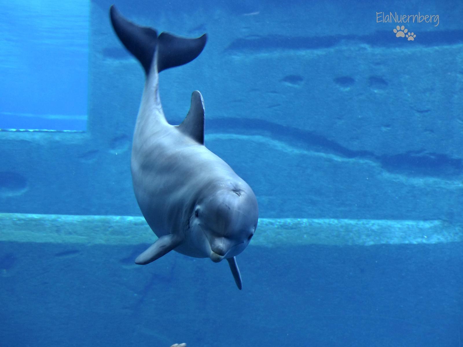 Happy Birthday! - Delphin NAMI - 20.07.2015 - Tiergarten Nürnberg